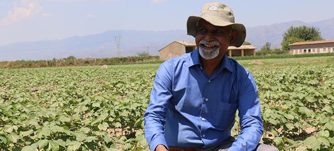Non-GMO Cotton Only in Turkey